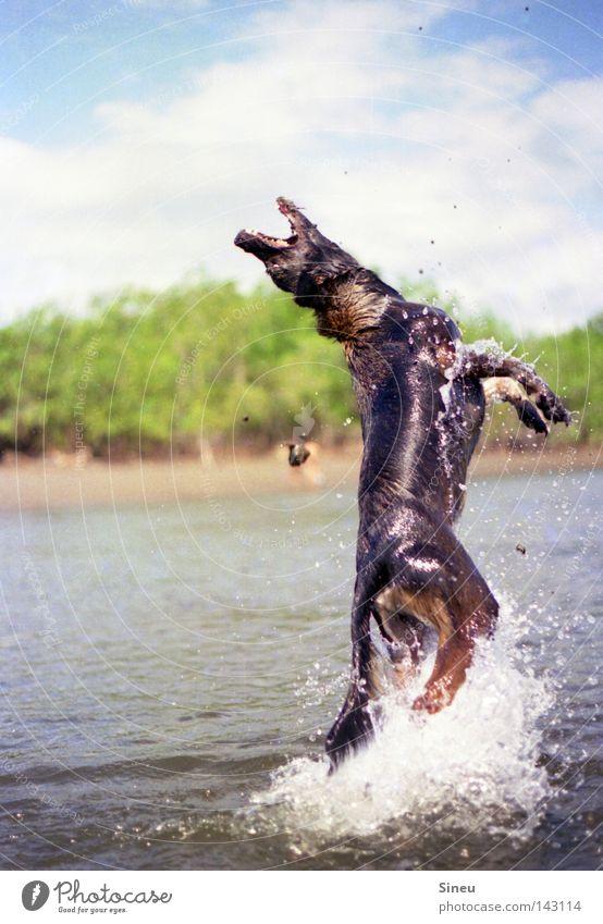 Dog Water Sun Summer Joy Animal Playing Movement Coast Sand Happy Jump Lake Swimming & Bathing Drops of water Pelt