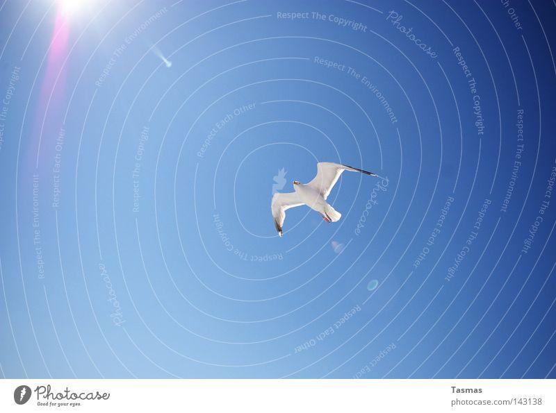Touch the Sun Summer Sky Bird Flying Blue Seagull Sunbeam Back-light Flight of the birds 1 Full-length White Cloudless sky Deserted