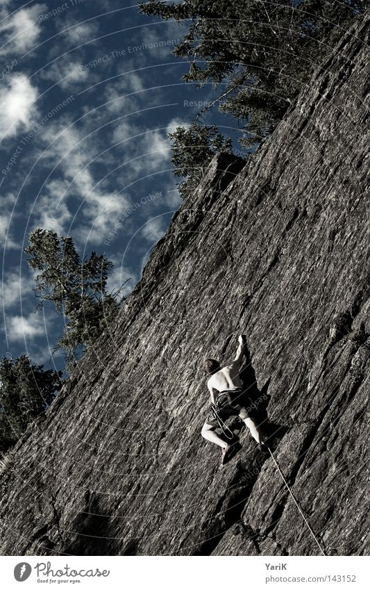 Spiderman Mountaineering Rock Man Stone Stony Free-climbing Downward Under Abseil Rope Climbing rope Belt Collateralization Rescue Leaf Roof Clouds Tree Sunbeam