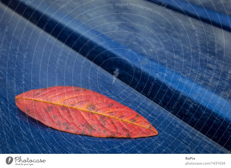 Nature City Plant Blue Beautiful Tree Red Loneliness Leaf Cold Environment Yellow Autumn Natural Wood Park