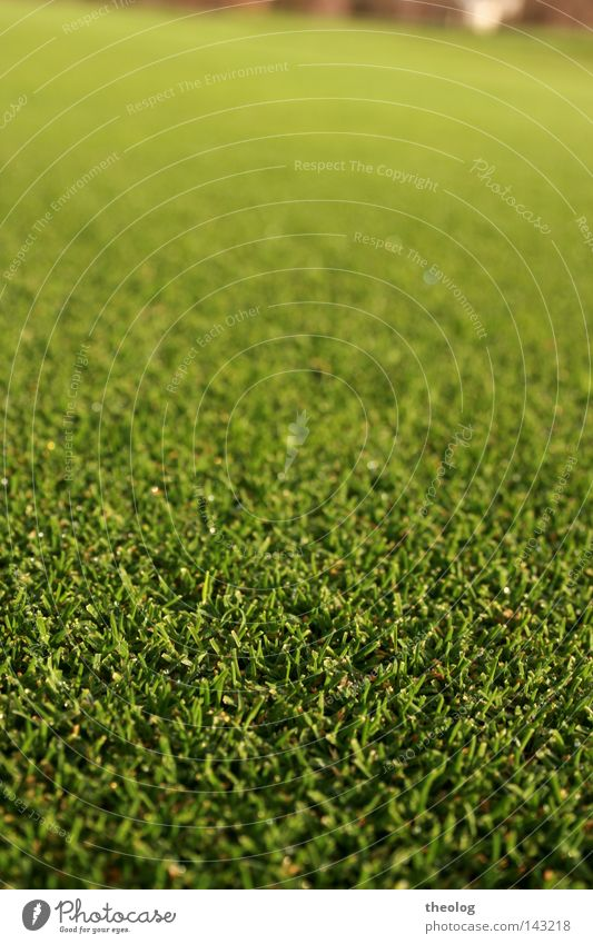 Lawn golf course Grass surface To feed Golf Sporting grounds Golf course Green focus gradient