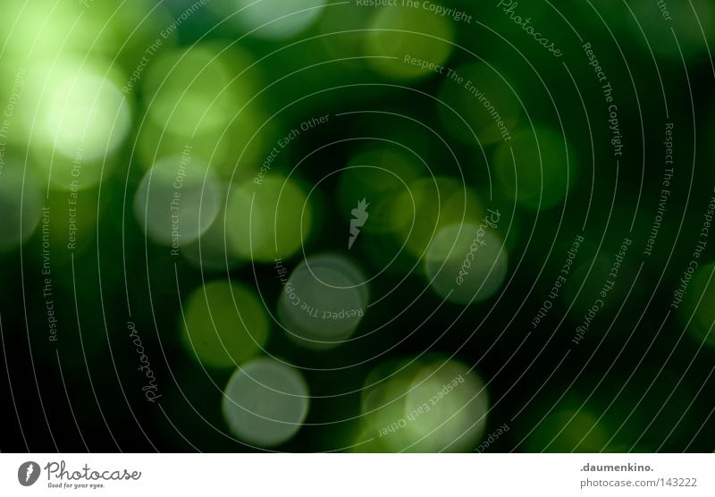 the movement between the raindrops Grass Tree Leaf Pixel Error Blur Abstract Summer Obscure Earth Sand Focal point Point Sphere Circle Patch Colour