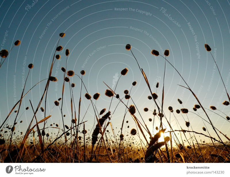 Sky Yellow Grass Gold Food Nutrition Italy Agriculture Grain Appetite Blade of grass Seed Wheat Progress Ear of corn