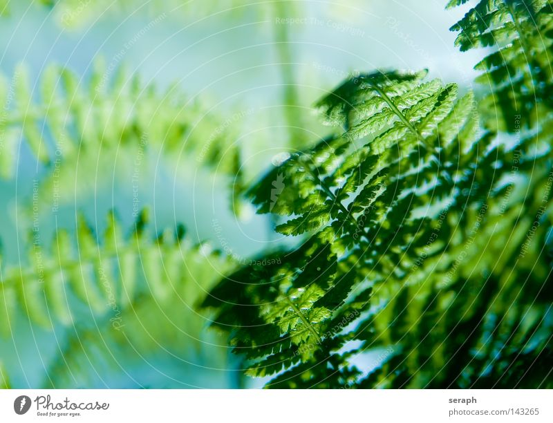 Ferns Green Dark Rachis Pteridopsida Plant Environment Delicate Damp Soft Plumed Fresh Growth Environmental protection Botany Biology Maturing time