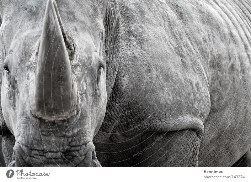 Nature Old Animal Gray Fear Skin Large Might Dangerous Threat Africa Wrinkle Wild Zoo Wild animal Wrinkles