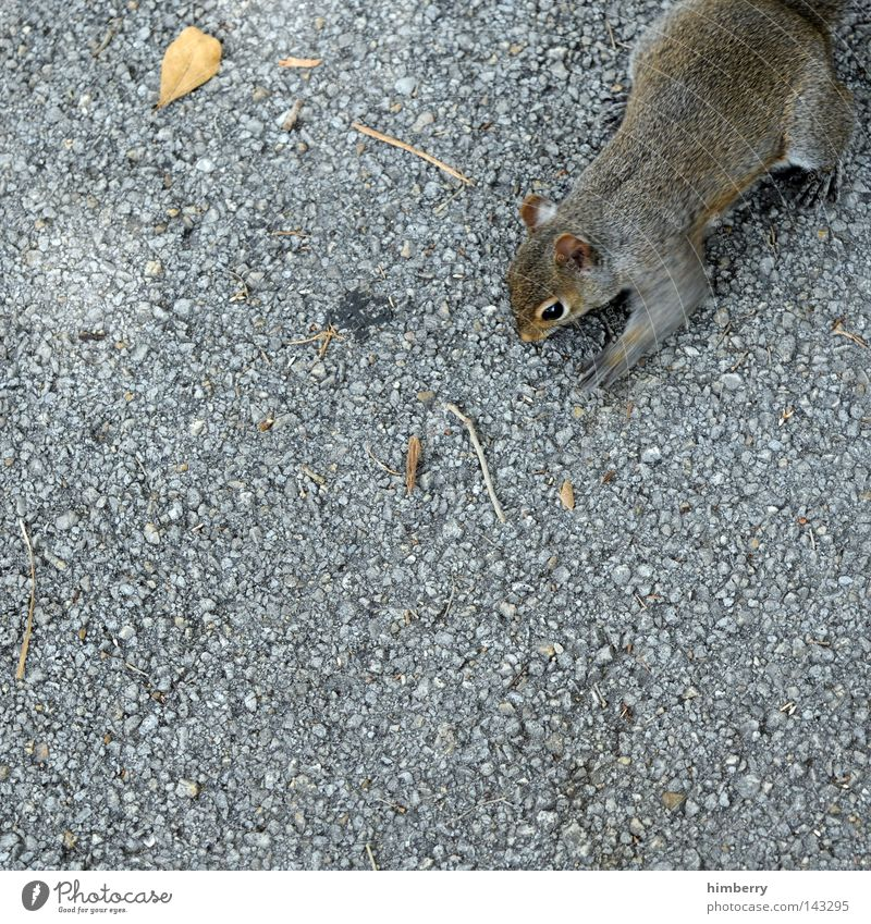 photo theft on the internet Squirrel Animal Zoo Walking Jump Park Wild animal Sweet Head Asphalt Concrete Floor covering Ground Motive Thief Mammal Trust Autumn