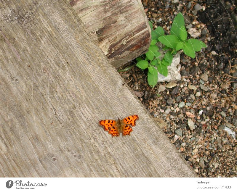 Green Plant Wood Orange Butterfly
