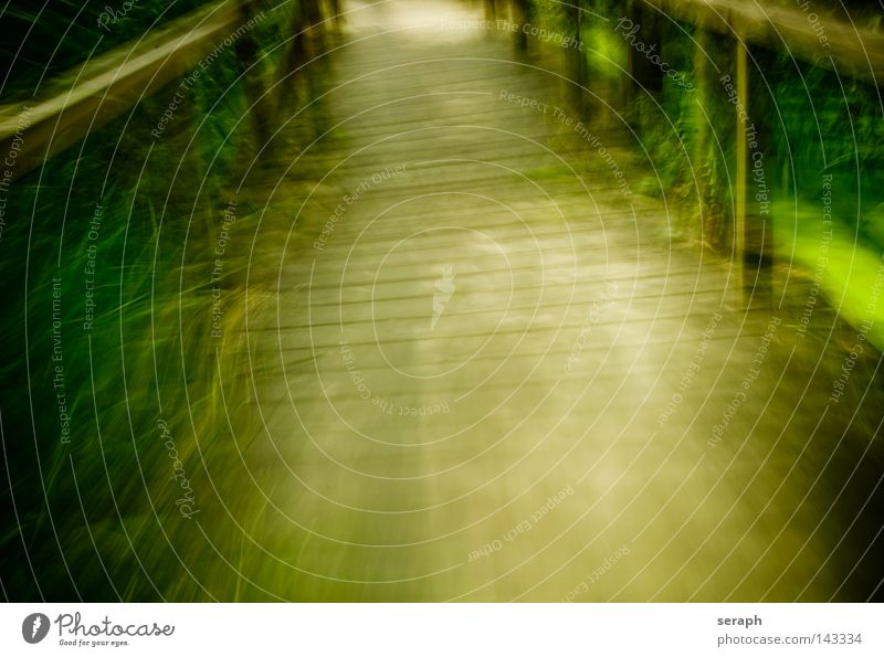 Footbridge Motion Nature Leaf Movement Lanes & trails Dream Art Background picture Flying Speed Fresh Perspective Bridge Soft Handrail Footpath Common Reed