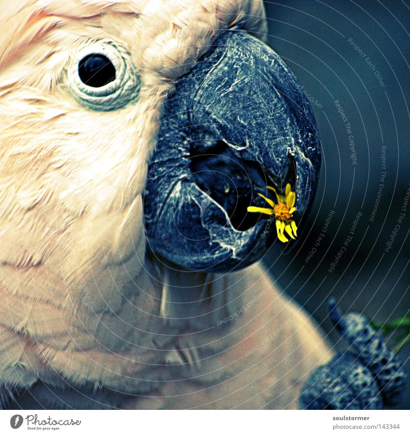 Old White Flower Eyes Nutrition Animal Yellow Freedom Head Bird Flying Parrots Delicious Beak Digital photography