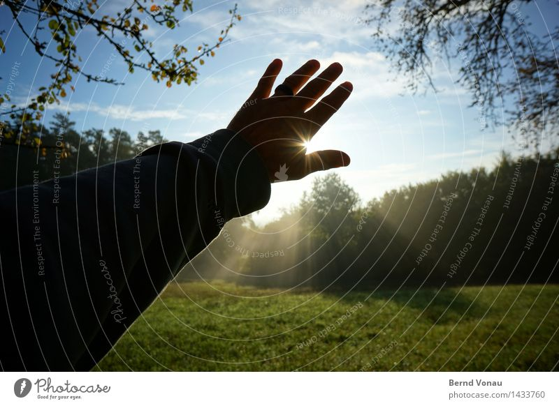 WL Human being Masculine Hand Fingers 1 45 - 60 years Adults Environment Nature Landscape Sun Autumn Plant Tree Grass Meadow Emotions Moody