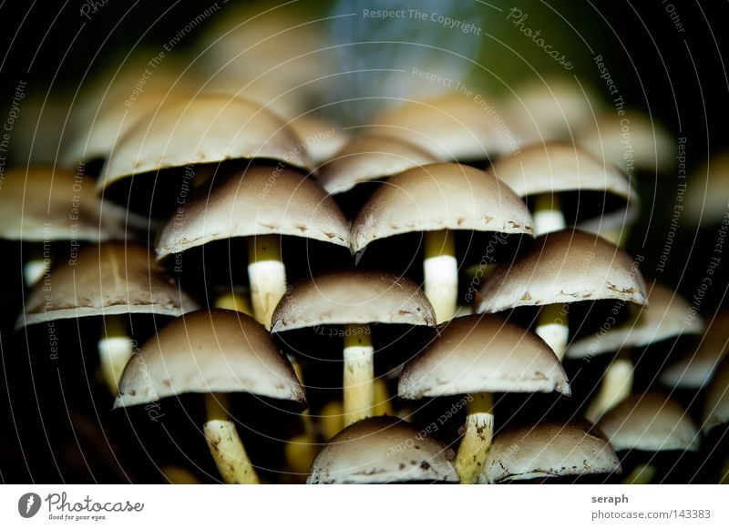 Shrooms Spore Accumulation Mushroom Poison Mushroom cap Blur Environment Seasons Biology Damp Autumn Ecological Symbiosis Maturing time Macro (Extreme close-up)