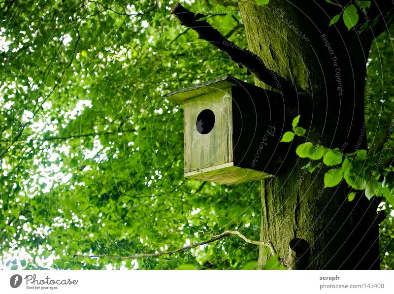 Home Sweet Home Nature Tree Plant Leaf Forest Brown Weather Bird Flat (apartment) Closed Perspective Living or residing Protection Derelict
