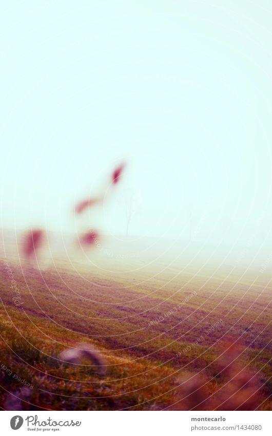 Sky Nature Plant Blue Landscape Far-off places Cold Environment Autumn Meadow Grass Natural Brown Horizon Weather Wild
