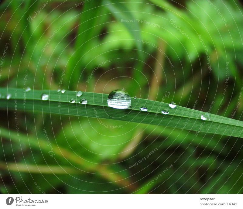Crystal clear Dew Fresh stalks of grass Nature