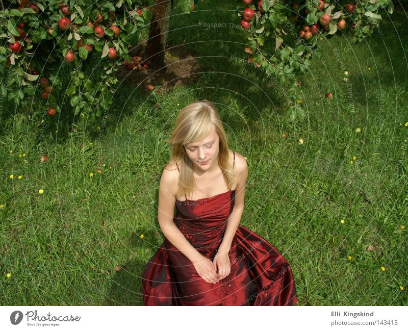 The apple girl Apple Apple tree Red Green Dress Long Lawn Blonde Woman Sit Grass Garden Meadow Yellow Grief Think Folded Mature Beautiful pauline Sadness