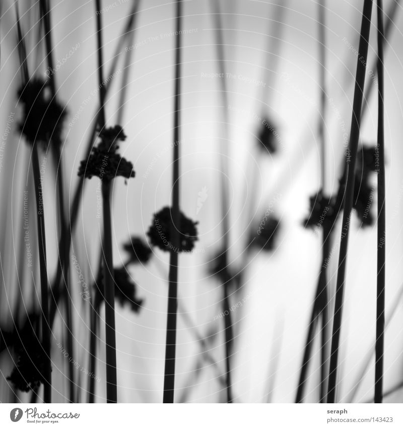 Nature in Mind Grass Blade of grass Common Reed Green Muddled Grassland Ecological Plant Meadow Blossom Autumn Diagonal Across Hollow Blur Herbs and spices