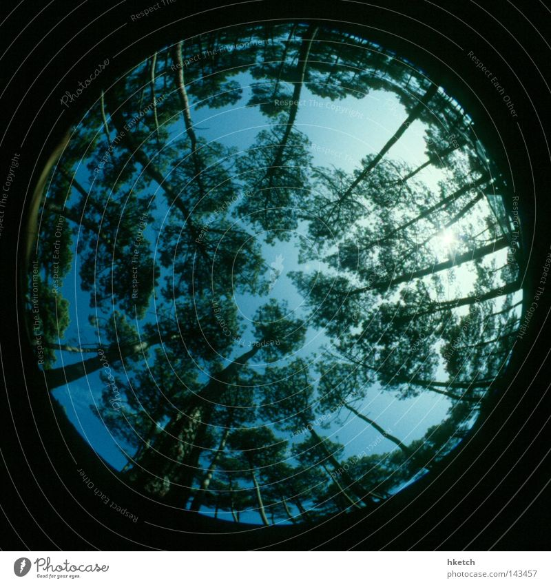 Sky Tree Sun Green Blue Summer Forest Above Tall Growth Round Analog Fisheye Upward Positive Slide