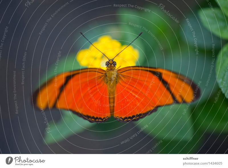 Color your life! Animal Butterfly Zoo 1 Yellow Green Orange Butterfly house Feeler Colour Multicoloured Contrast Exterior shot Deserted