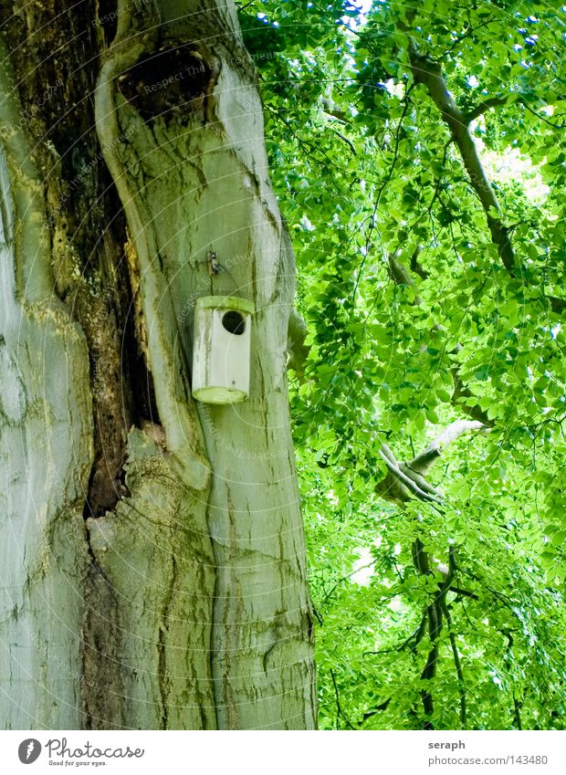 Birdhouse Tree trunk Tree bark Flat (apartment) Camouflage Hang Nest Parental care Hiding place Weather Flap Closed Forest Plant Landing Strip Brown Beige