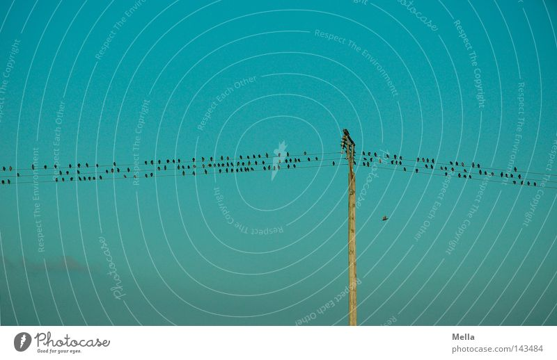Sheet music by nature Cable Technology Energy industry Sky Bird Group of animals Flock Electricity pylon Telegraph pole Crouch Sit Small Above Blue Row