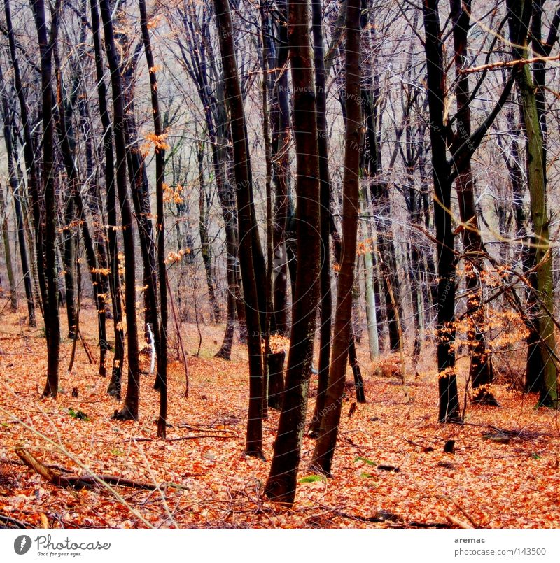 autumn forest Forest Tree Autumn Leaf Red Landscape Nature To go for a walk
