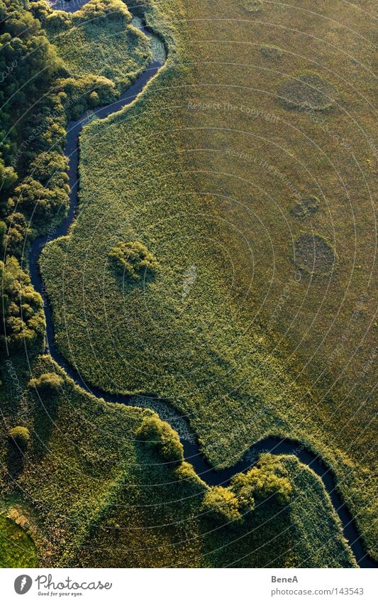 brook Brook River Water Marsh Bog Common Reed Tree Evening Evening sun Shadow Air Aerial photograph Bird's-eye view Flying Landscape Land Feature Detail Green