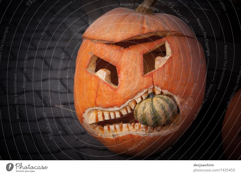 """the mouth not too full, A"""" Franken """" pumpkin from its most beautiful side. A Great Pumpkin has a small pumpkin in his mouth. Joy Harmonious Trip Art Autumn"""
