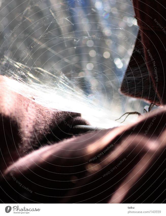 LITTLE SPIDER Spider Drape Red Pane Sunrise Net Wrinkles Glass blue glass Morning ...