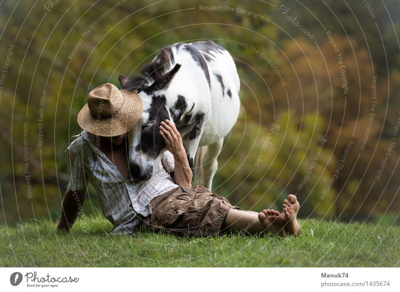 Buzzer`s End Animal Farm animal Horse 1 Relaxation To hold on To enjoy Embrace Exceptional Free Positive Emotions Moody Happy Power Passion Acceptance Trust