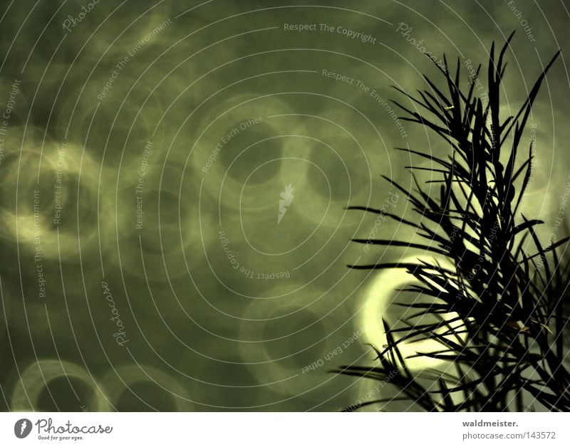 Beautiful Circle Longing Harmonious Willow-tree Willow tree Branchage Body of water Twigs and branches Catadioptric system (effect)