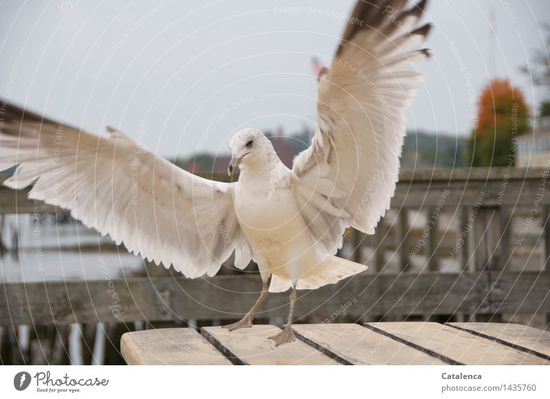 Naughty Möve Ocean Nature Animal Wild animal Bird Wing Seagull 1 Feather Flying Curiosity Black White Appetite Colour photo Subdued colour Exterior shot
