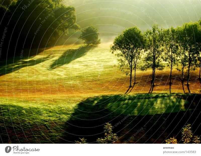 morning sun Forest Green Sunbeam Fog Light Sunrise Golf course Ball sports Park Landscape Nature Morning