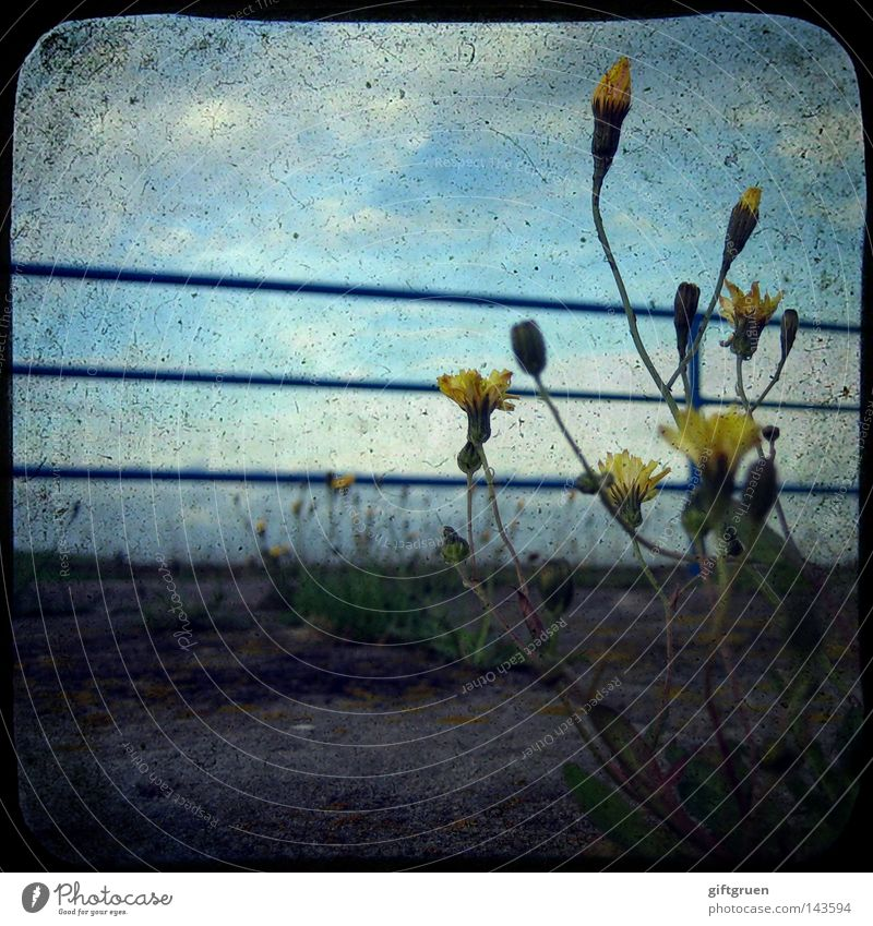Flower Loneliness Street Power Dirty Force Gloomy Floor covering Transience Blossoming Handrail Doomed Forget Faded