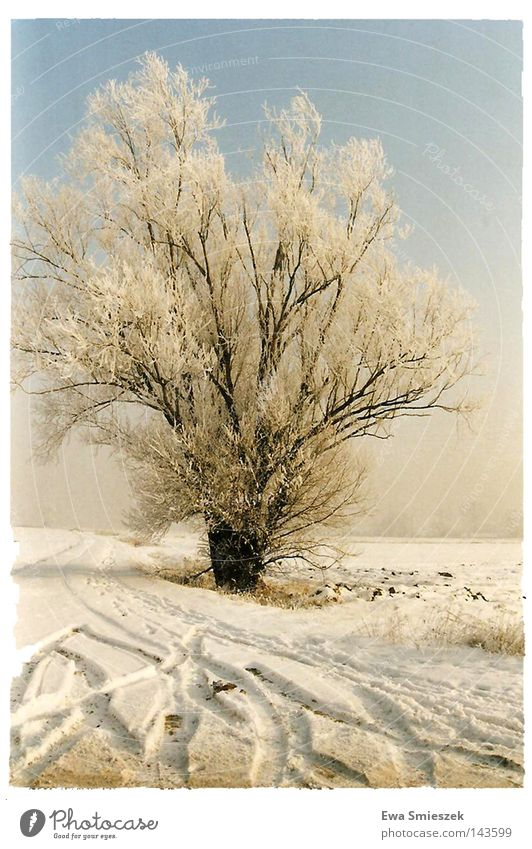 White Beautiful Blue Tree Leaf Winter Loneliness Far-off places Colour Cold Dark Snow Bright Ice Multiple Europe