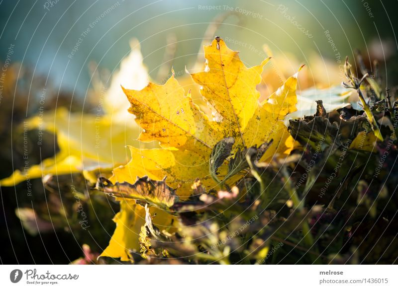 Nature City Beautiful Relaxation Leaf Yellow Life Autumn Natural Style Garden Brown Moody Park Dream Illuminate
