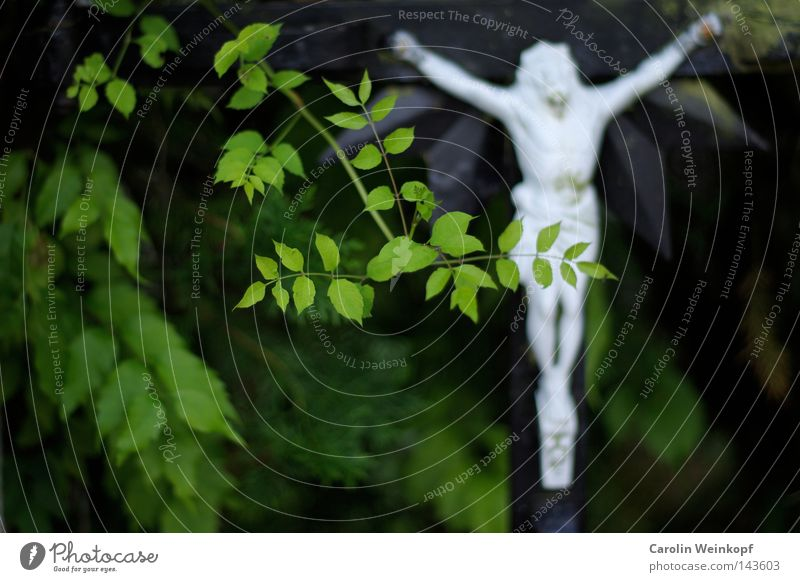 Plant Leaf Religion and faith Europe Bushes Trust Crucifix Christian cross Hang France Belief Jesus Christ Cover Concealed Catholicism