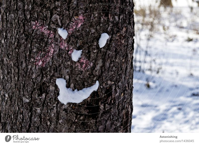 a cool smile Face Eyes Nose Mouth Environment Nature Landscape Winter Ice Frost Snow Snowfall Plant Tree Park Wood Looking Friendliness Happiness Cold Brown