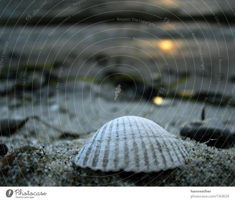 Water Sun Summer Beach Vacation & Travel Clouds Cold Sand Air Coast Wind Weather Wet Target Mussel Denmark