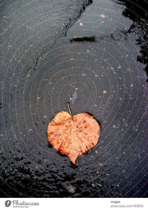 sweetheart Leaf Autumn Auburn Street Wet Rain Heart Loneliness Transience Water