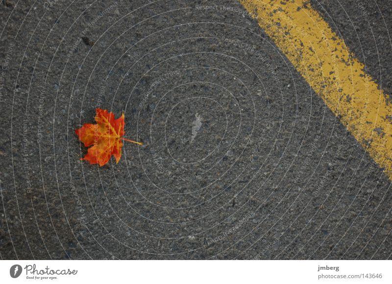 fallen Leaf Autumn Brown Asphalt Pavement Individual Autumn leaves Maple tree Fallen Limp Autumnal colours Maple leaf