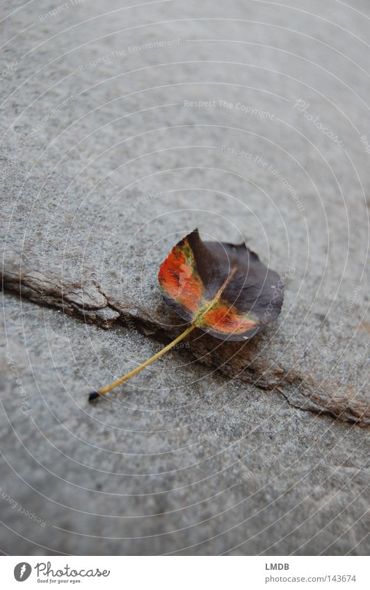 Tree Green Plant Calm Leaf Yellow Life Relaxation Autumn Death Gray Stone Sadness Brown Orange Grief