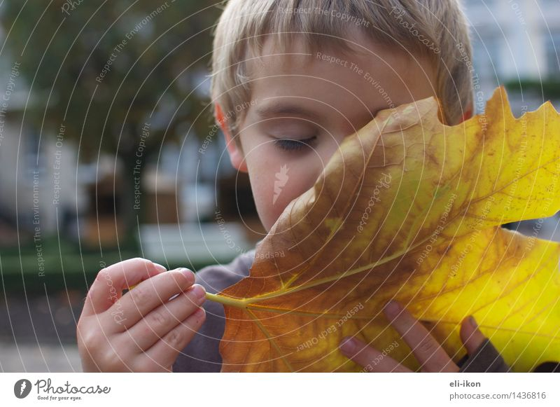I can smell the fall. Human being Child Boy (child) Infancy 1 3 - 8 years Autumn Leaf To enjoy Peaceful Attentive Calm Contentment Fragrance Experience Emotions