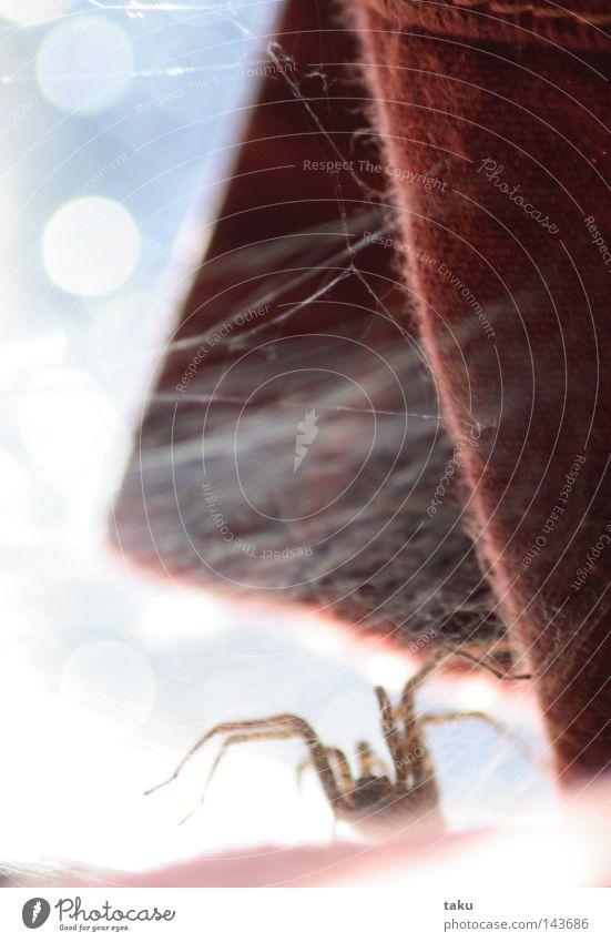 Red Window Glass Net Wrinkles Drape Spider Sewing thread Pane