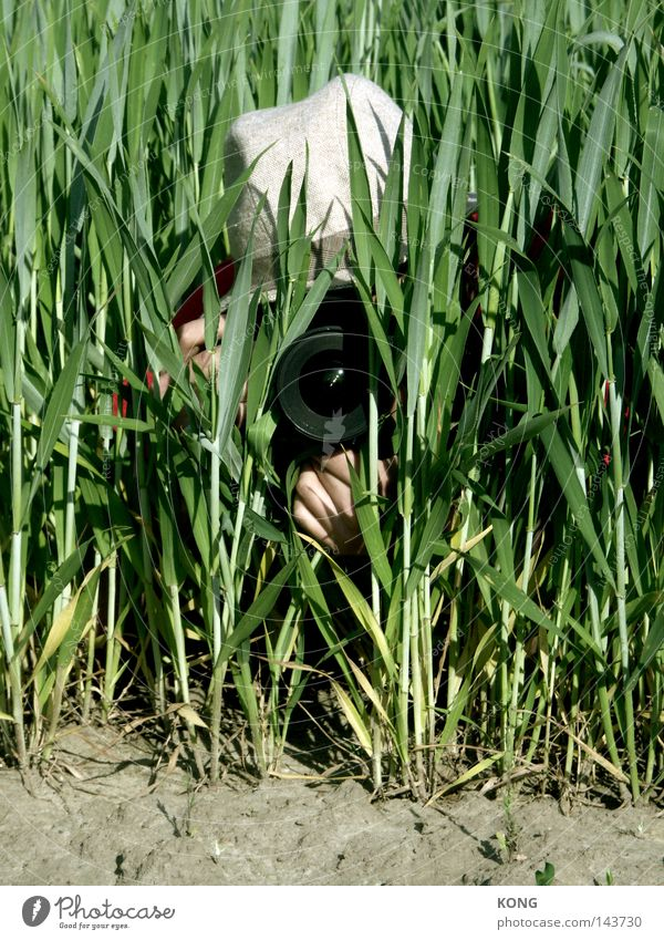 Plant Green Field Observe Photography Mysterious Discover Media Camera Blade of grass Hide Audience Video camera Photographer Vista Lens