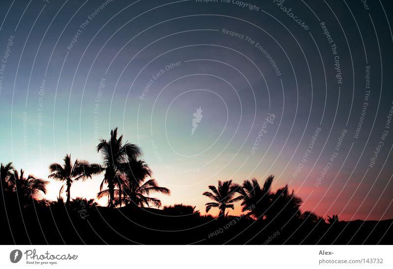 Sky Tree Ocean Blue Red Summer Beach Vacation & Travel Dark Cold Warmth Lighting Physics Hot Palm tree Paradise