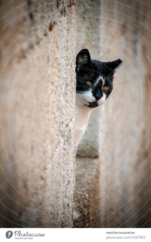 eye contact Elegant Athens Greece Old town Wall (barrier) Wall (building) Facade Pet Wild animal Cat Animal face Pelt Paw 1 Stone Observe Crouch Listening