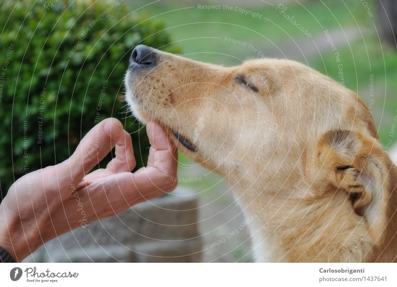 # 1437641 Pet Dog Animal Emotions Love of animals Peaceful Serene Calm Relationship Relaxation Friendship Background picture Colour photo Detail Day
