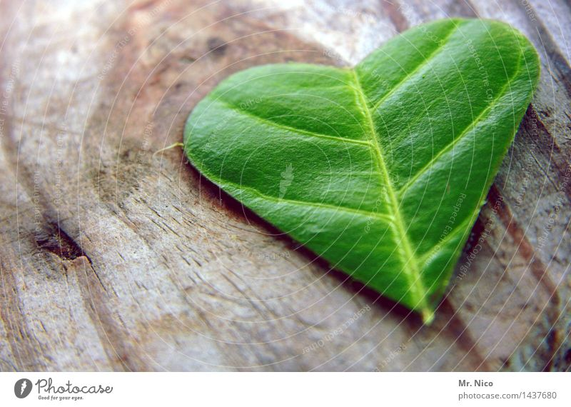 Green Heart Plant Leaf Warm-heartedness Sympathy Together Love Infatuation Romance Grateful Wood Herbs and spices Heart-shaped Happy Green thumb Colour photo