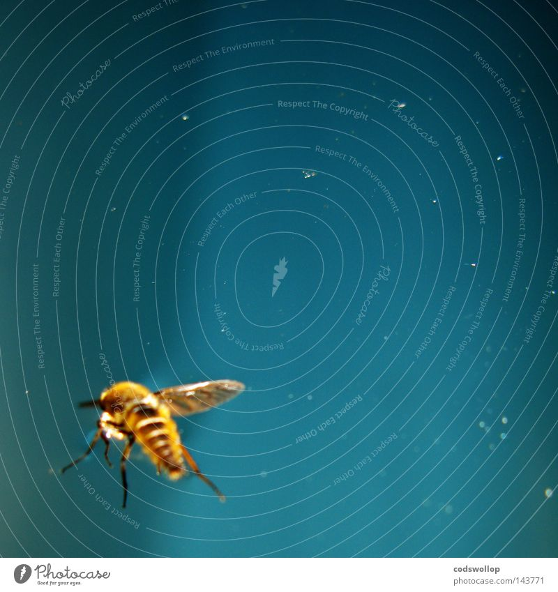 abeille Bee Blue Sky light sunlight flying Snapshot