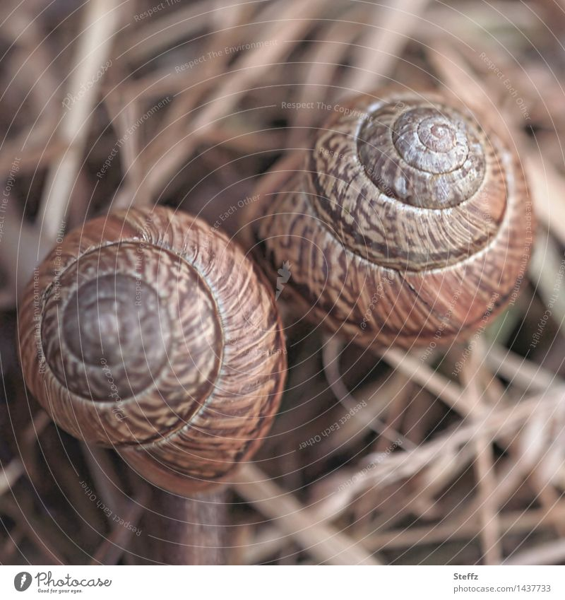 Two neighbours snails Snail shell snail shells at the same time Attachment Match Friendship Related two together Neighbor's house Together Neighbours Spiral